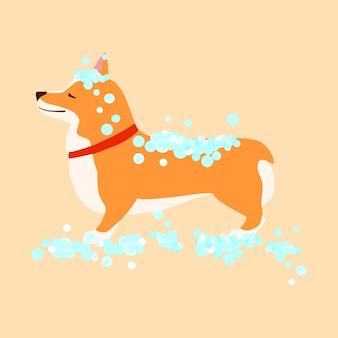 Szczęśliwy pies. walijski corgi. mycie szczeniaka. koncepcja pielęgnacji. płaska ilustracja wektorowa