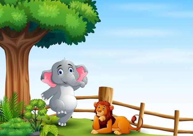 Szczęśliwy słoń i lew na wzgórzu