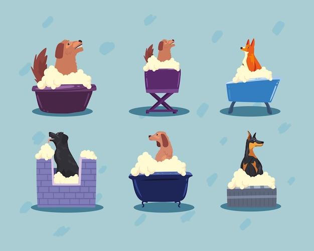 Sześć kąpiących się psów