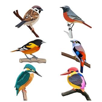 Sześć kolorowych ptaków, ilustracja