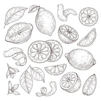 Szkic cytryny. ręcznie rysowane pomarańcze limonka, rysunek ołówkiem kwiaty cytrusowe, gałąź kwiat i skórka. ilustracja wektorowa na białym tle pokrojone owoce. rysunek owoców i cytryny, grawerowana pomarańcza organiczna