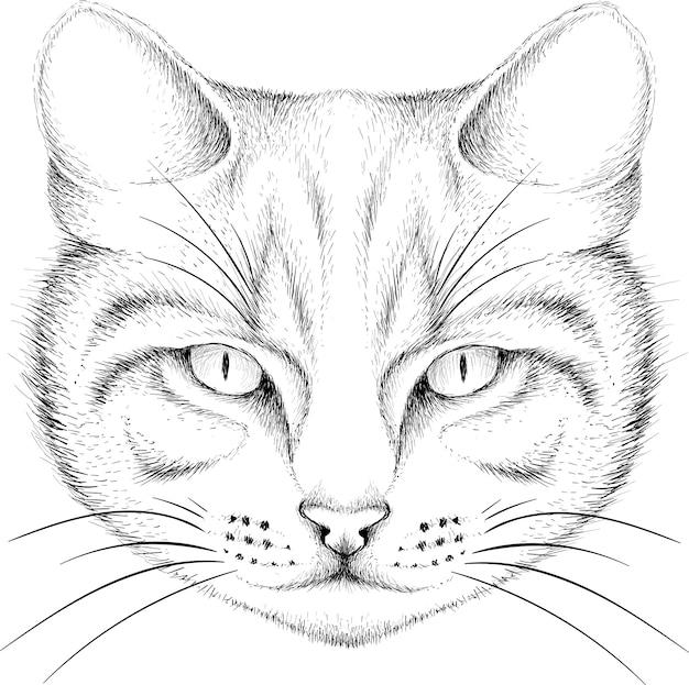 Szkic głowy kota