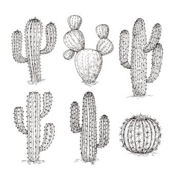 Szkic kaktusa. ręcznie rysowane pustynne kaktusy. vintage grawerowanie zachodniej meksykańskiej rośliny wektor zestaw