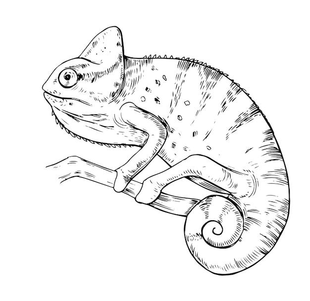 Szkic kameleona. ręcznie rysowane ilustracja na białym tle
