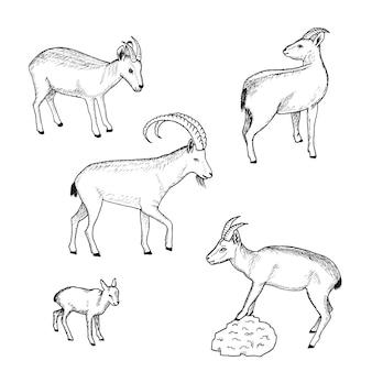 Szkic kolekcja zwierząt gospodarskich