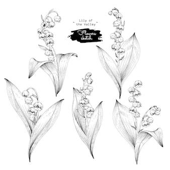 Szkic kolekcji kwiatowej botaniki, rysunki kwiatów konwalii.