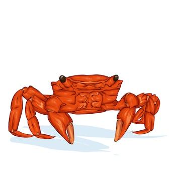 Szkic kraba z wektorem okularów przeciwsłonecznych. ręcznie rysowane ilustracja owoce morza. doskonały do menu, plakatu lub etykiety.