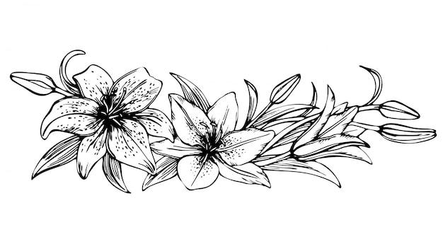 Szkic kwiatowy kwitnących lilii. ręcznie rysowane ilustracji kwiatu lilii. piękna monochromatyczna czarno-biała lilia ramki
