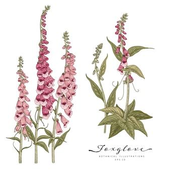 Szkic kwiatowy zestaw dekoracyjny. różowe i fioletowe rysunki kwiatów naparstnicy.