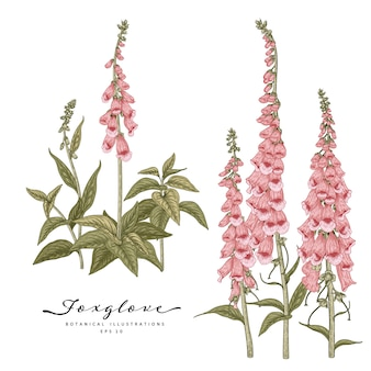 Szkic kwiatowy zestaw dekoracyjny. rysunki kwiatów naparstnicy. sztuka linii sztuka na białym tle. ręcznie rysowane ilustracje botaniczne.