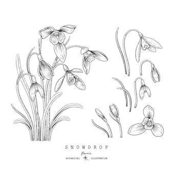 Szkic kwiatowy zestaw dekoracyjny. rysunki kwiatów przebiśnieg. czarno-białe z grafiką na białym tle. ręcznie rysowane ilustracje botaniczne.