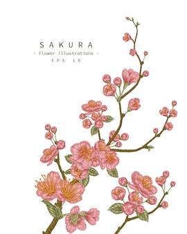 Szkic kwiatowy zestaw dekoracyjny. rysunki kwiatów wiśni.