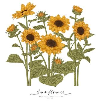Szkic kwiatowy zestaw dekoracyjny. rysunki słonecznika. bardzo szczegółowa grafika liniowa na białym tle. ręcznie rysowane ilustracje botaniczne.