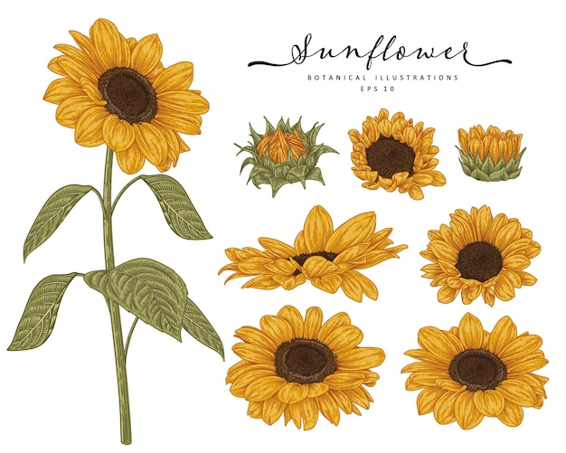 Szkic kwiatowy zestaw dekoracyjny.