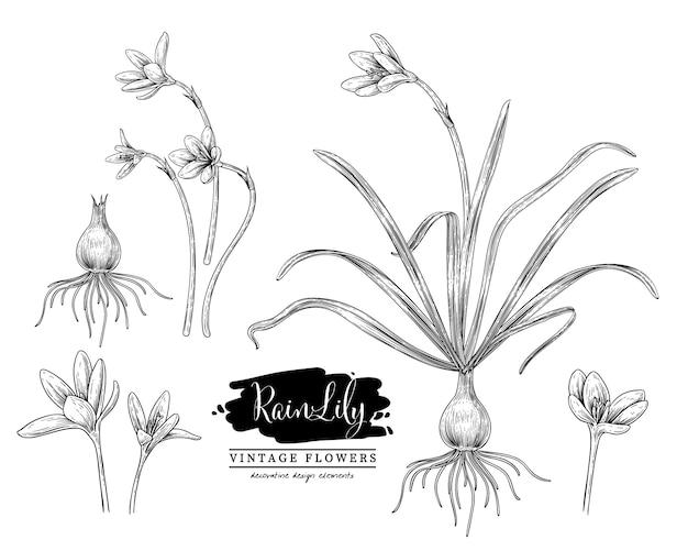Szkic kwiatowy ziołowy zestaw deszczowych rysunków kwiatów lilii