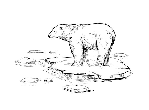 Szkic niedźwiedzia polarnego. ręcznie rysowane ilustracja na białym tle