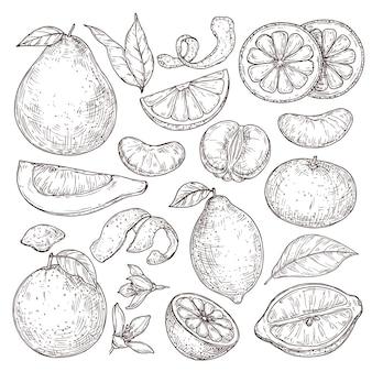 Szkic owoców cytrusowych. ręcznie rysowane pomarańczowy mandarynka pomelo, na białym tle tropikalne soczyste rośliny. ilustracja wektorowa kwiat kwiat rocznika cytryny. cytryna zdrowy szkic i kwaśne owoce