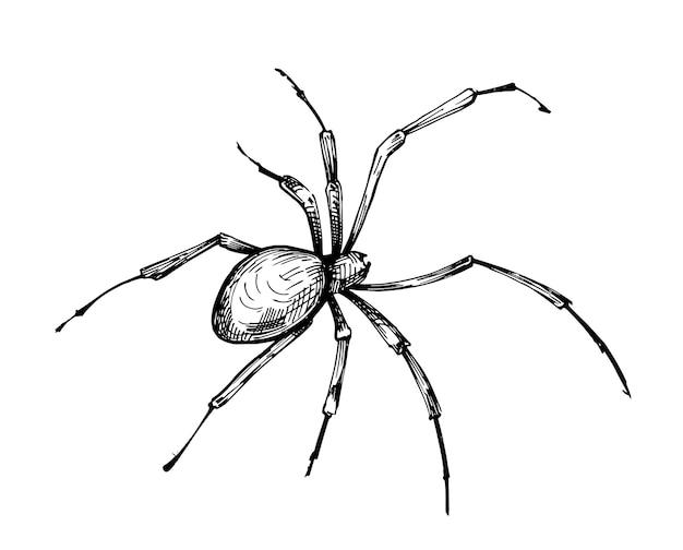Szkic pająka. ręcznie rysowane ilustracja na białym tle