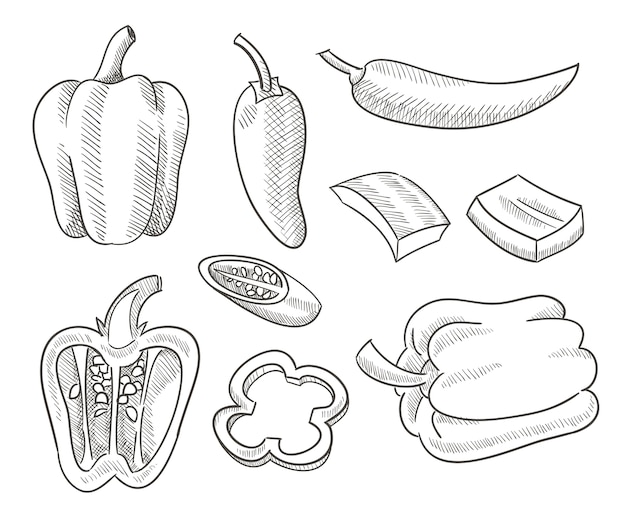 Szkic papryki chili