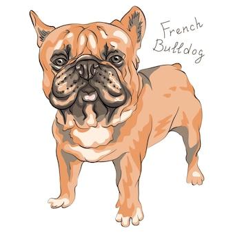 Szkic psa domowego rasy buldog francuski bull