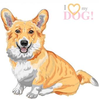 Szkic psa pembroke welsh corgi z uśmiechem