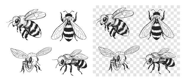 Szkic pszczoły. ilustracja wektorowa na przezroczystym tle