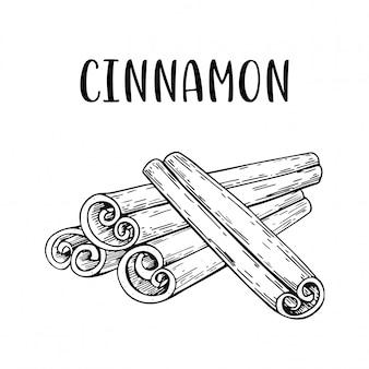 Szkic ręcznie rysowane cynamon