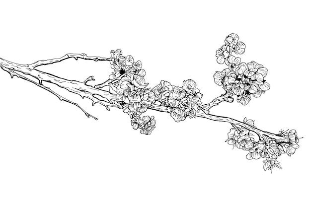 Szkic sakura czarno-biały.