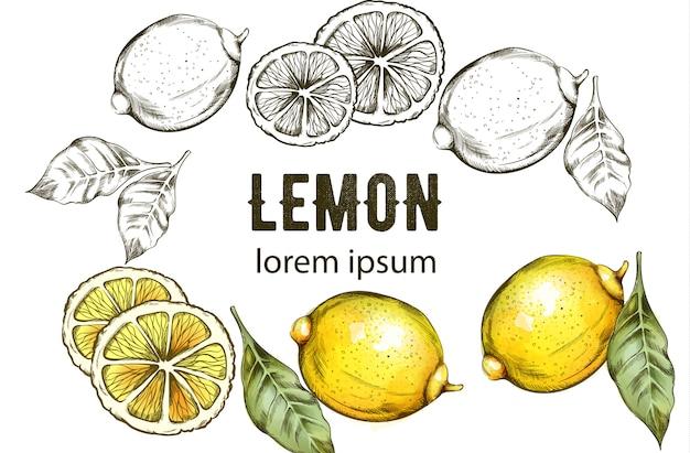 Szkic styl żółte cytryny z zielonymi liśćmi