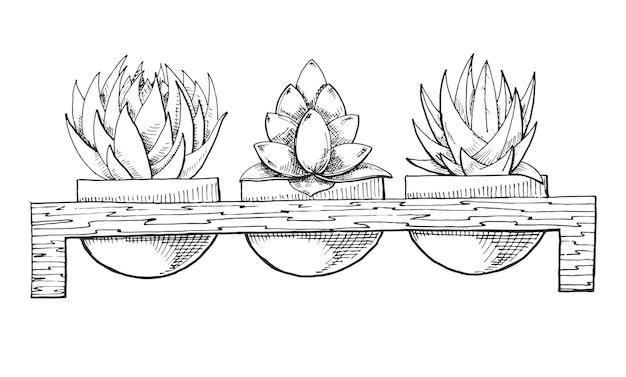 Szkic trzech sukulentów w doniczkach na drewnianym stojaku