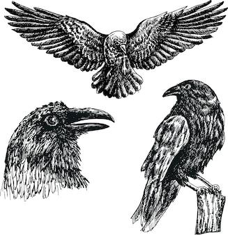 Szkic wektor czarny ptak kruk na białym tle