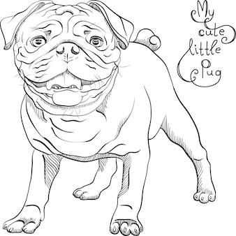 Szkic wektor ładny pies rasy czarny mops