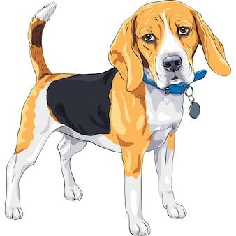 Szkic wektor poważny pies rasy beagle