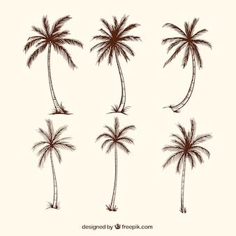 Szkice drzew palmowych