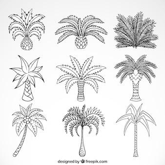 Szkice kolekcji palmy