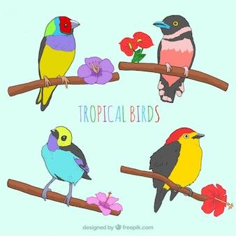 Szkice kolorowe tropikalnych ptaków z kwiatów