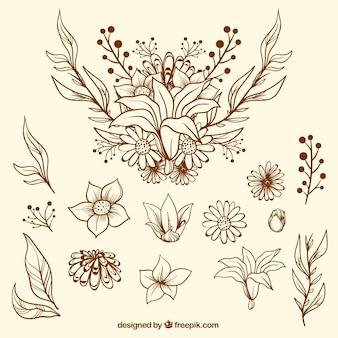 Szkice kwiatów i liści