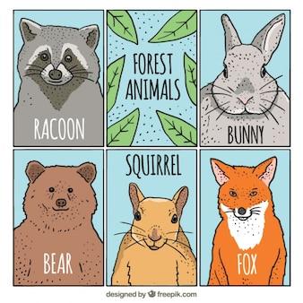 Szkice las karty zwierzęta juczne