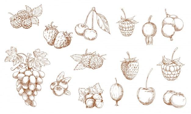 Szkice na białym tle jagody i owoce