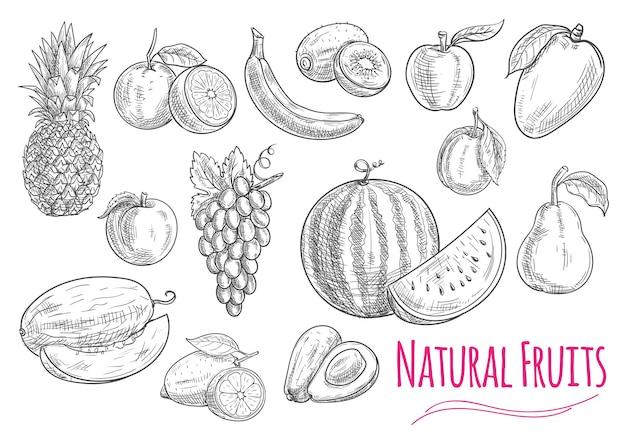 Szkice owoców na białym tle