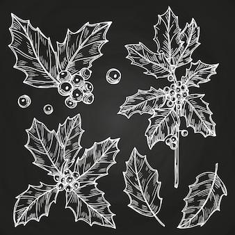 Szkicowy zestaw liści i jagód