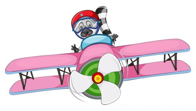 Szop jeżdżący samolotem