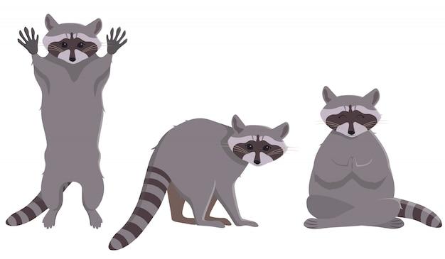 Szop pracz w różnych pozach. słodkie zwierzę w stylu cartoon.