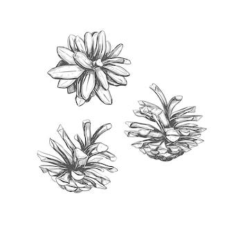Szyszka . ręcznie rysowane ilustracji.