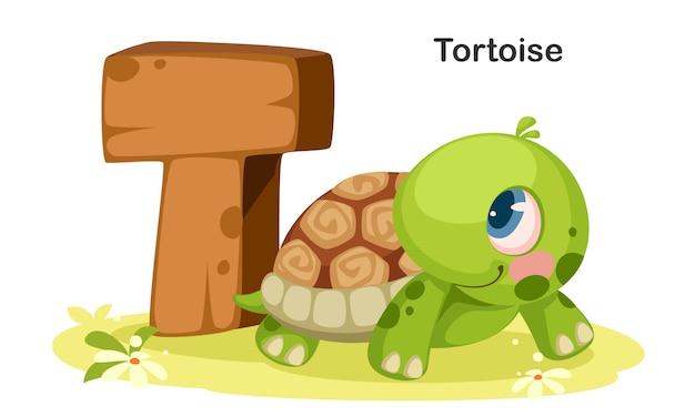 T dla żółwia