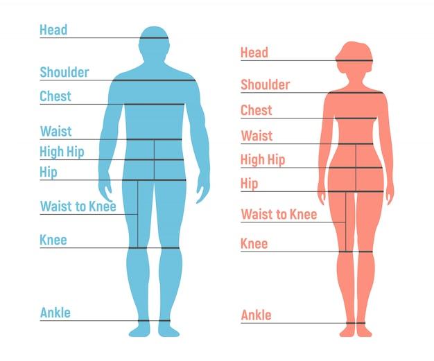 Tabela rozmiarów mężczyzny i kobiety. sylwetka człowieka z przodu. odosobniony