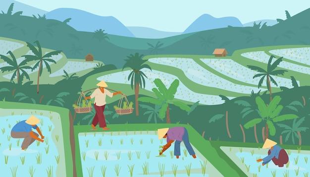 Tarasowe azjatyckie pola ryżowe w górach z pracownikami w stożkowych słomianych kapeluszach. tradycyjne rolnictwo.
