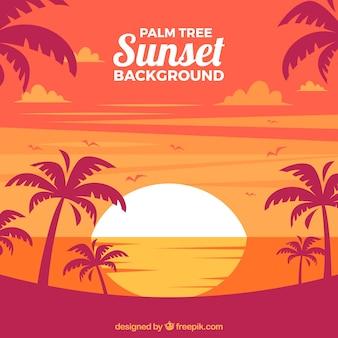 Tło krajobrazu o zachodzie słońca z palmami