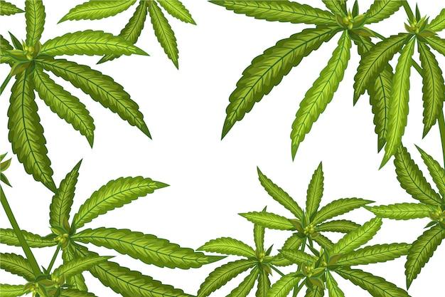 Tło liści botanicznej marihuany