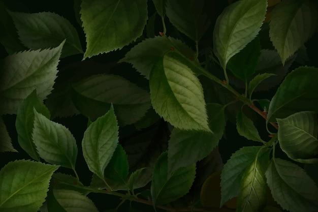 Tło liści moreli briançon